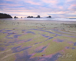 Wilderness Coast, Olympic National Park, Washington