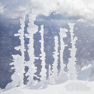 Winter Winds, Hurricane Ridge, Olympic National Park