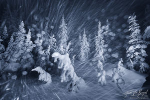 Winter Snowstorm, Hurricane Ridge, Olympic National Park