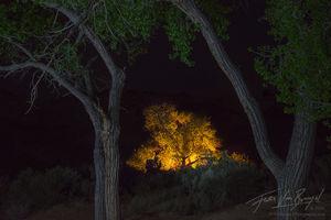 Campfire, Golden Cottonwood, Colorado Plateau