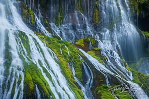 Rivulets and Mosses, Gifford Pinchot, Washington
