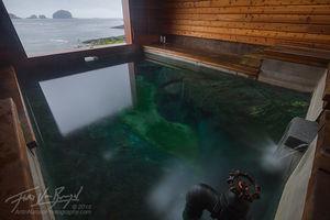 White Sulphur Hotsprings, Chichagof Island, Southeast Alaska