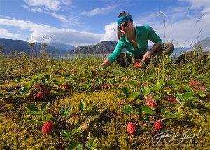 Picking Wild Strawberries, Glacier Bay National Park, Alaska