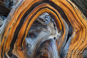 Wood Abstract, Sierra Nevada, California