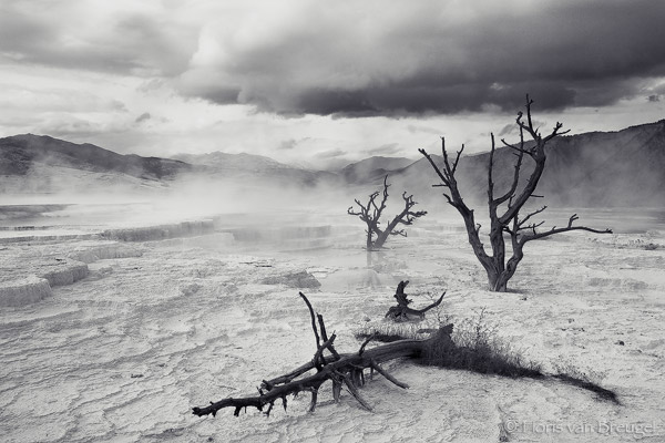Travertine Terrace Mammoth Hot Springs, Yellowstone National Park, Wyoming, travertine death, storm, trees, photo