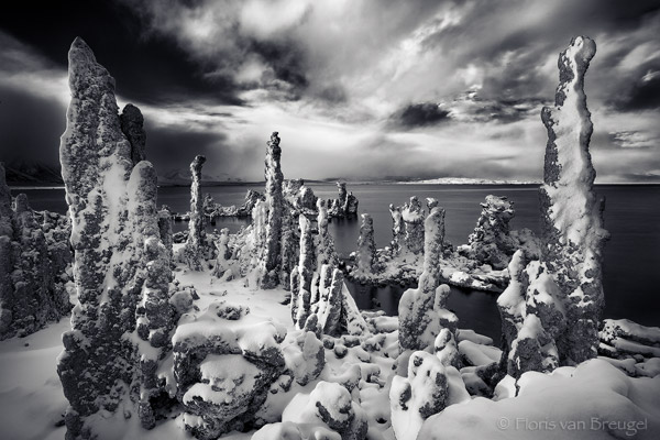 Mono Lake Tufa and Snow, Owens Valley, California, alien forest,, photo