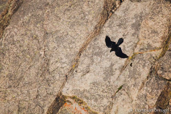 Stone Spirit, Rocky Mountains National Park, Colorado, mount evans, raven, photo