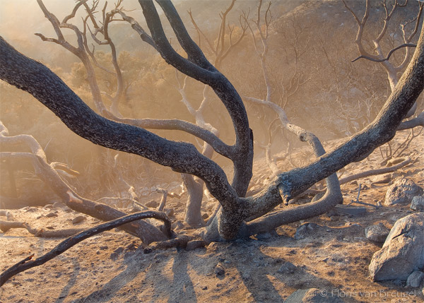 Wildfire Ash, San Gabriel Mountains, California, ash emergence, los angeles, photo