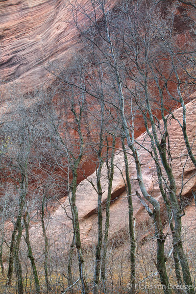 Kolobs Canyon, Zion National Park, Utah, canyon whispers, trees, sandstone, photo