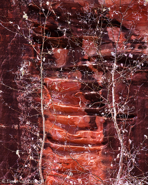 Red Rock Skeletons, Zion National Park, Utah, red rock, sandstone, canyon, photo