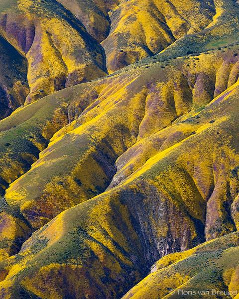 Temblor Range Flowers Aerial, Carrizo Plains National Monument, California, monet's palate, wildflower, 2010, spring, photo