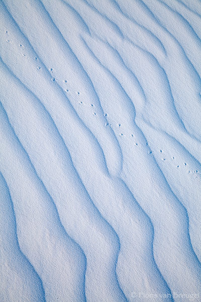 White Sands Abstract Tracks, White Sands National Monument, New Mexico, ripples, tracks, photo