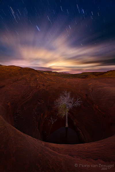 Lonely Tree, Escalante National Monument, Utah, dreams of solitude, moonset, photo