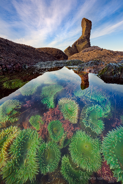Tide Pooling with Kids