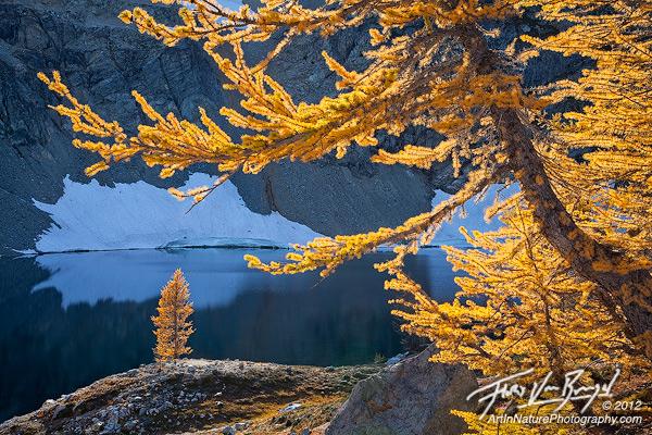 Autumn Larches, North Cascades, Washington