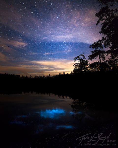 Bioluminescence in the San Juan Islands, Shaw Island, Washington, photo