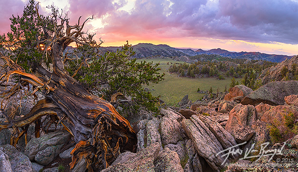 Bristlecone Pines, Sage Valley, White Mountains