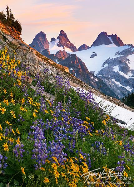 Alpine Wildflowers in the Cascades, Alpine Lakes Wilderness, Washington