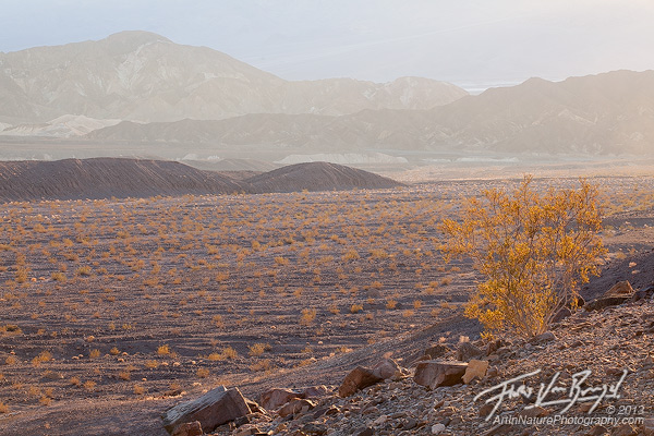 Creosote, Death Valley National Park, California