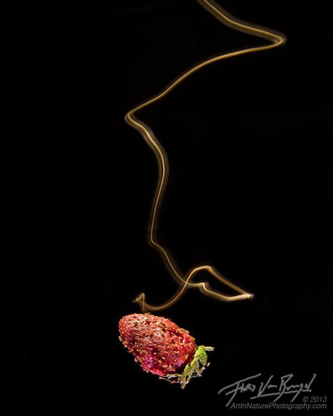 Drosophila melanogaster, Odor Plume Tracking, Scientific Research, photo