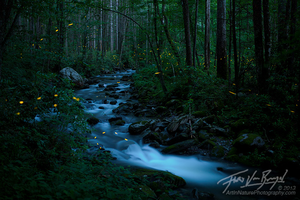 Fireflies Smoky Mountains, Synchronous, Tennessee