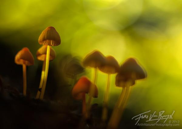 Mushrooms, Cascades, Autumn