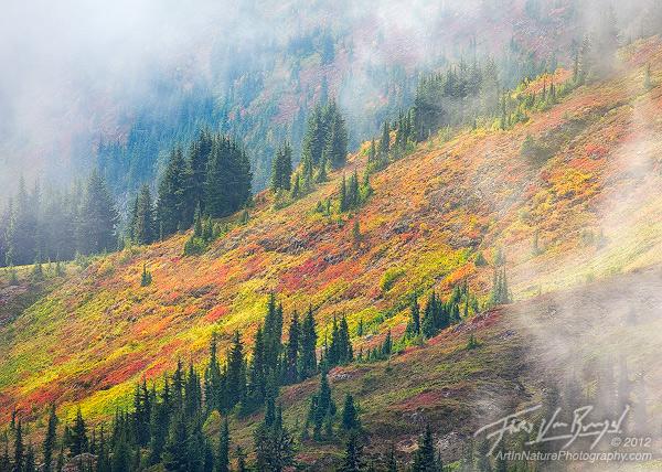 North Cascades Fall Foliage, Mist and Sun, Washington