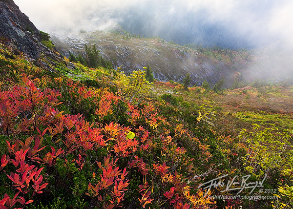 Fall Color North Cascades, Mist and Mountains, Washington