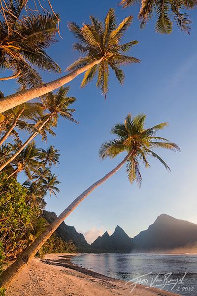 Sunrise on The Beach With Palm Trees Beach Sunrise Palm Trees Beach