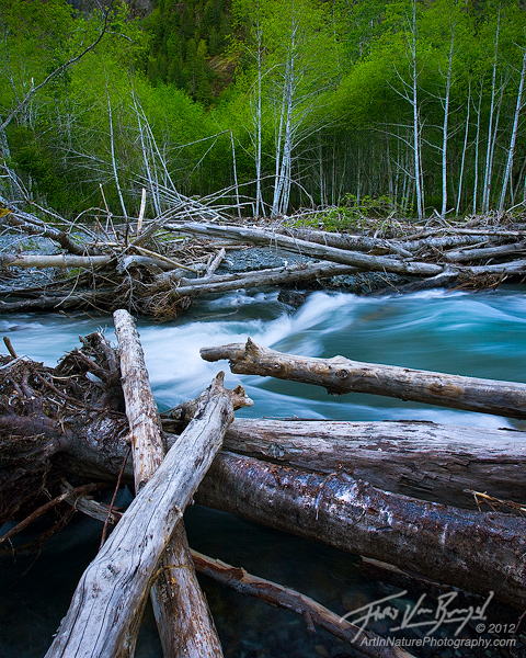 Queets River Wilderness, Olympic National Park, Washington, photo