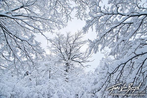 Snow Forest, El Chalten, Patagonia