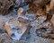 Pliocene Truffle print