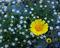 Flowershine print