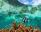 Fishbowl Lagoon print