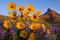 Wenatchee Wildflowers print