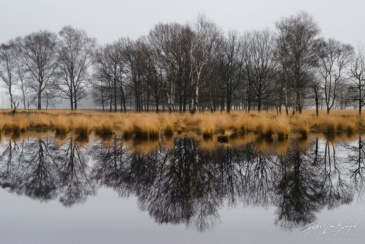 Kampina Reflection, Oisterwijk, the Netherlands, nature's mirror, dutch,, photo