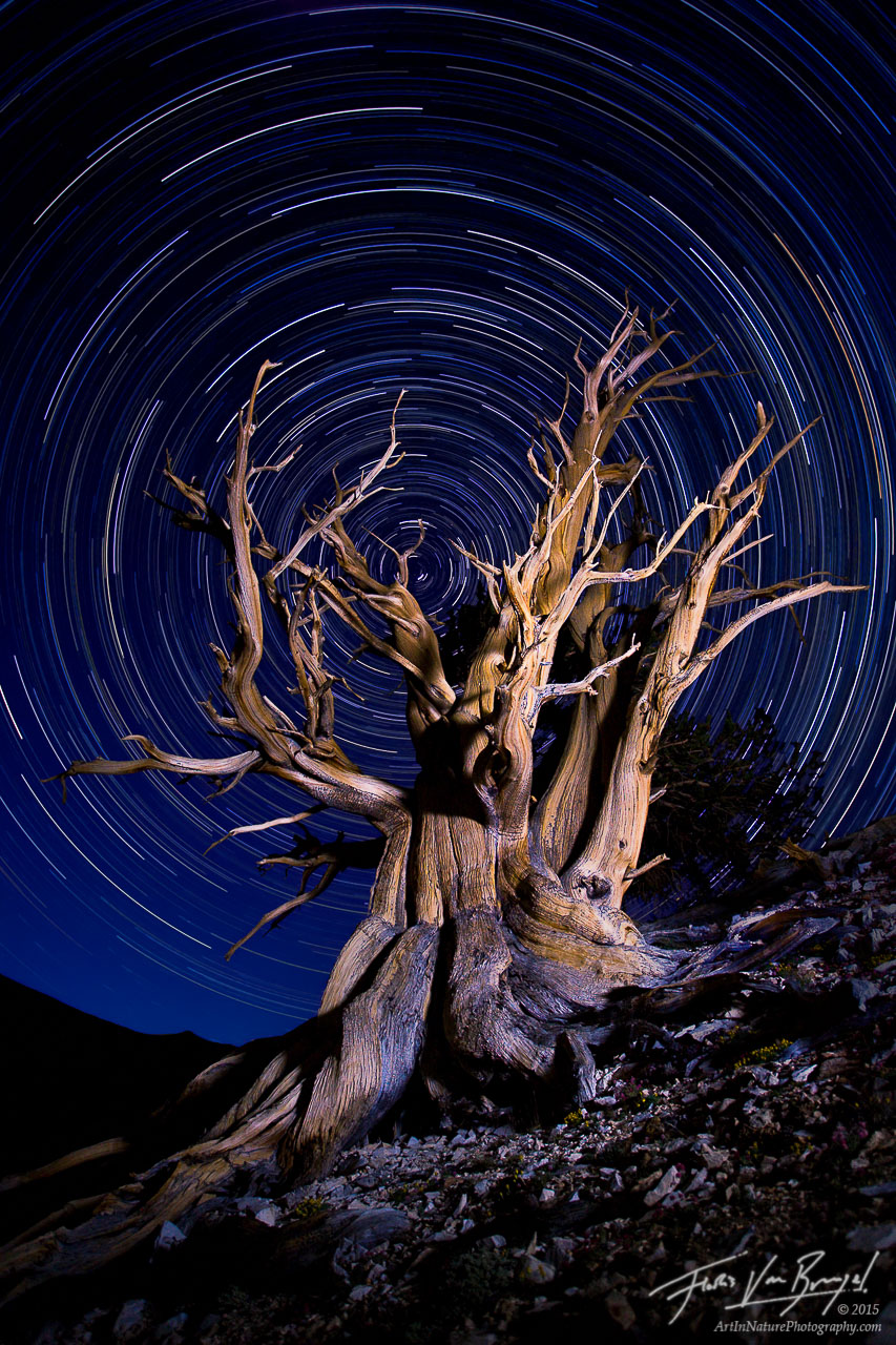 Bristlecone Pine Light Painting and Star Trails, White Mountains, California, essence of time, photo
