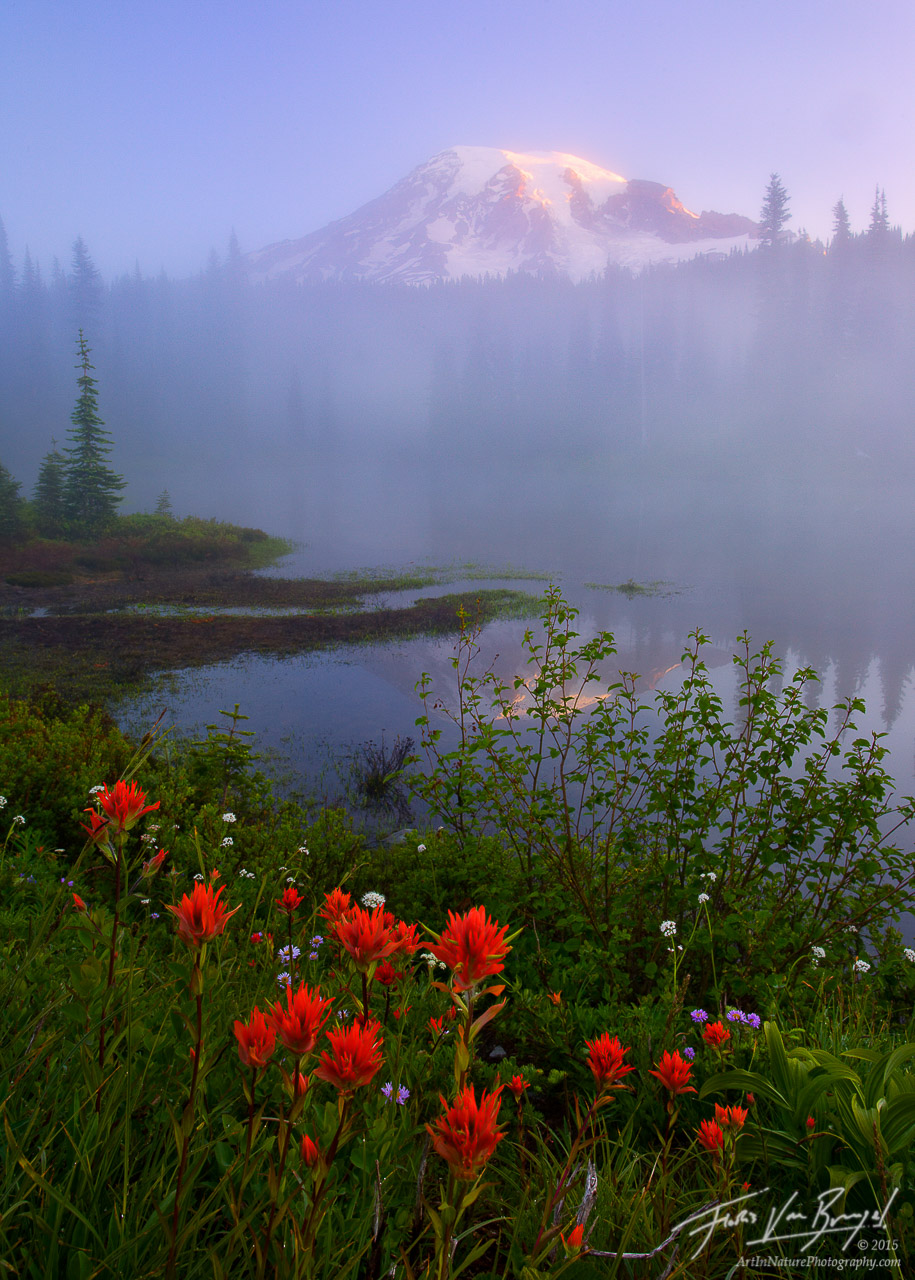 Mt Rainier Wildflowers and Mist, Mount Rainier National Park, Washington, painting the mountains mystery, photo