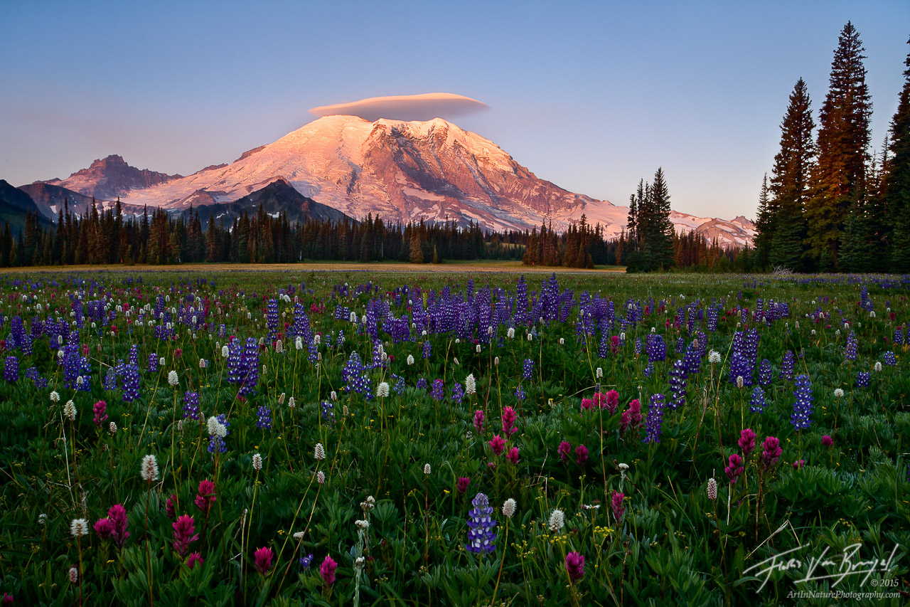 Flowers and Lenticular Cloud, Mount Rainier National Park, Washington, grand park, summer, wildflower, , photo