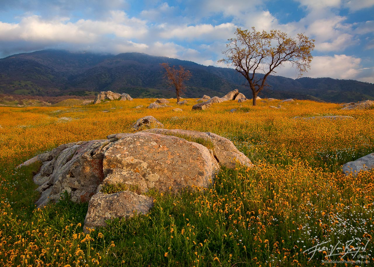California Gold Tehachapi Ca Art In Nature Photography