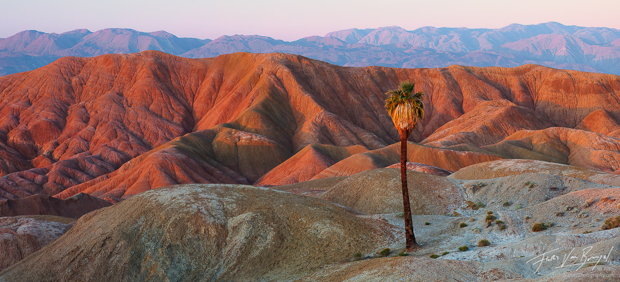 Lone Fan Palm Tree Oasis, Anza-Borrego State Park, California, paradise lost, , photo