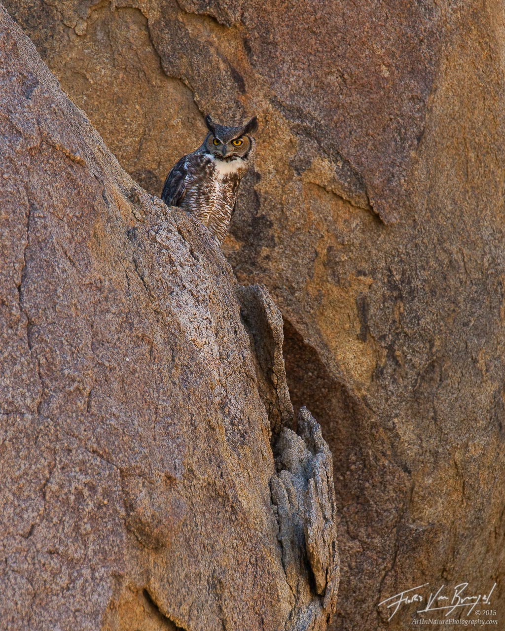Great-horned Owl Bubo virginianus, Alabama Hills, California, desert, eastern sierra, photo