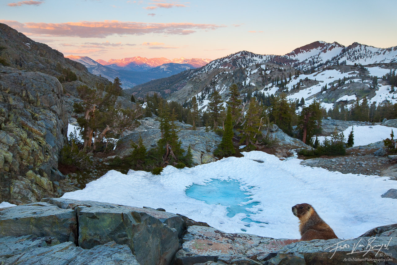 Marmot and Mountains, Ansel Adams Wilderness, California, marmot's view, minarets, Marmota flaviventris, photo