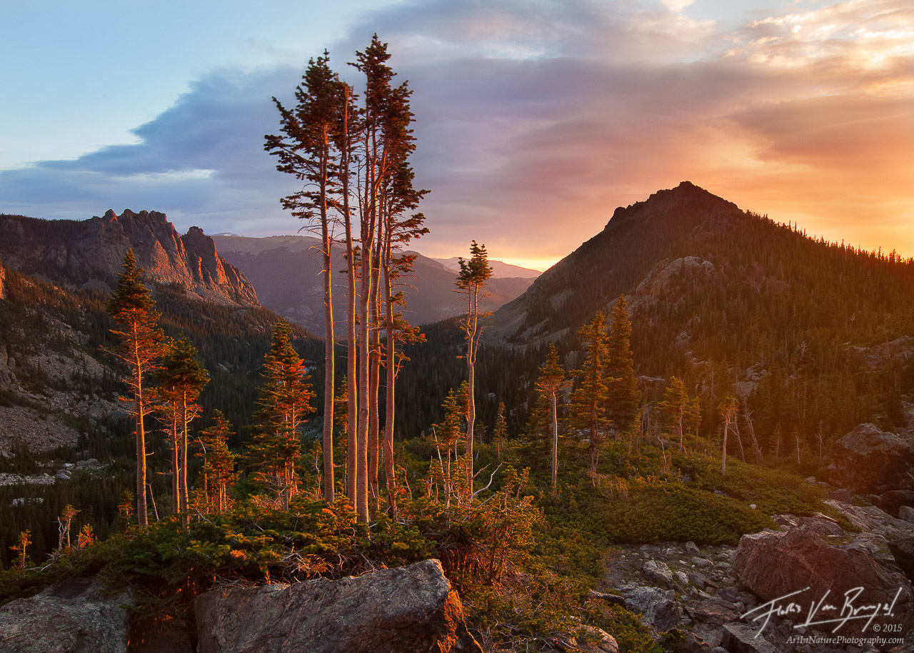Wind Stripped Trees Flagging, Rocky Mountains National Park, Colorado, naked in the sun, sun, photo