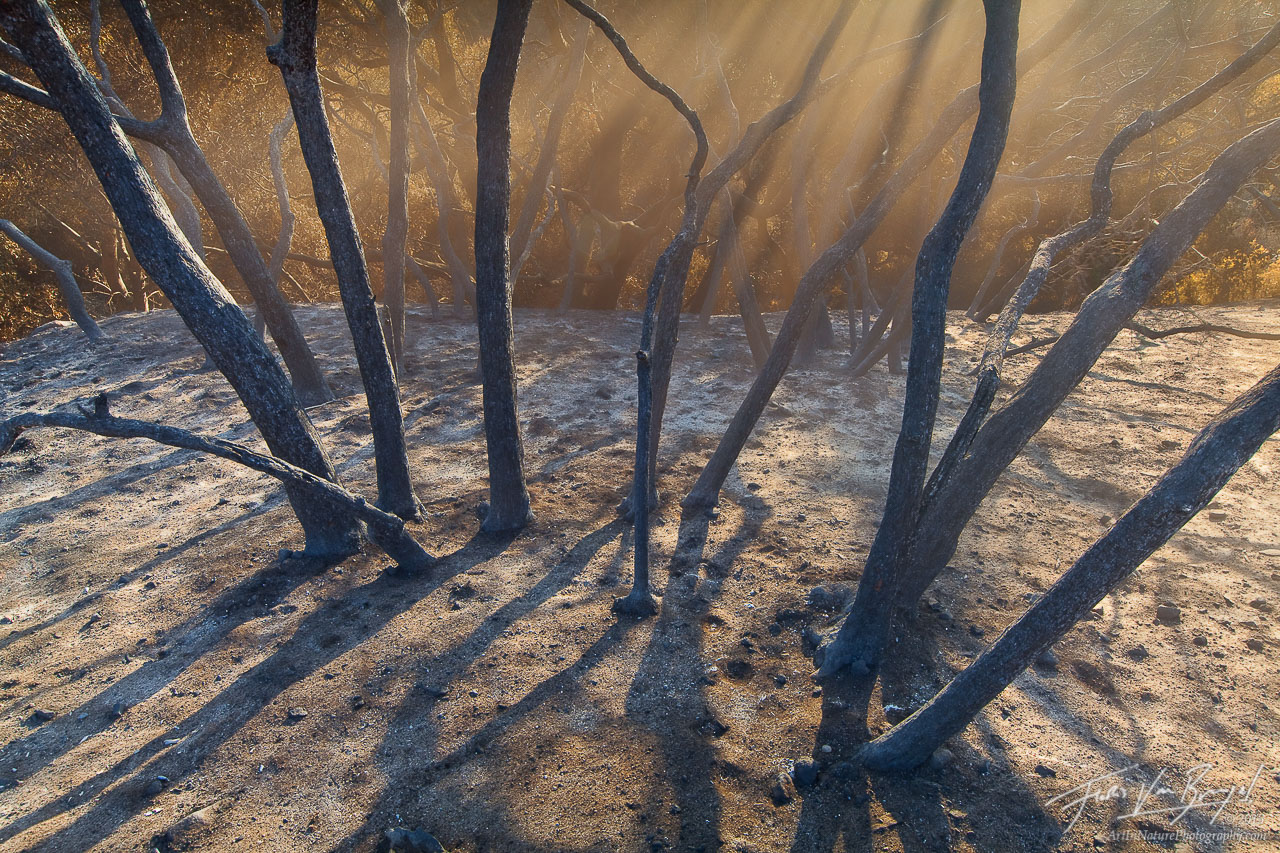 Ash and Burned Trees, San Gabriel Mountains, California, choking on ash, fire, station fire, los angeles, photo
