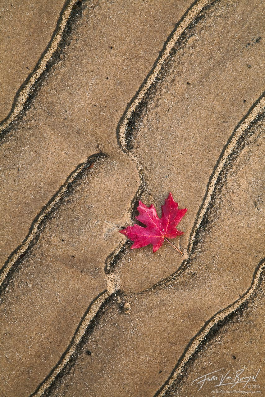 Maple Leaf Sand Abstract, Zion National Park, Utah, maple designs, fall, design, photo