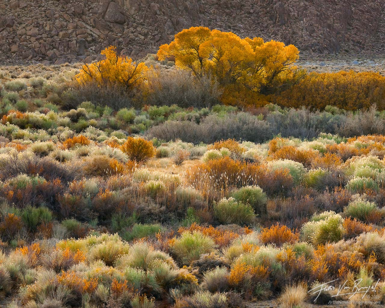Alabama Hills Fall Foliage, Owens Valley, California, flames of fall, photo