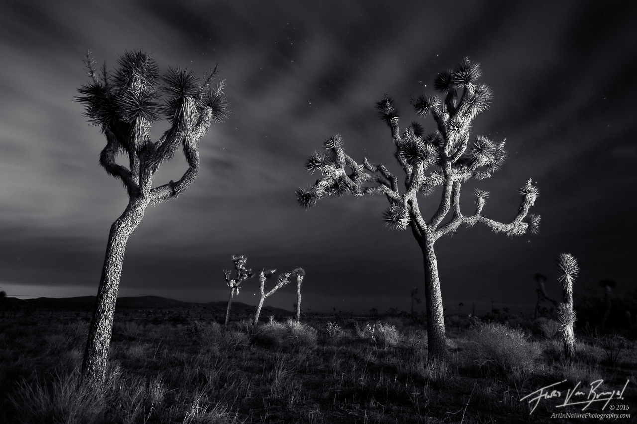Joshua Tree Light Painting at Night, Joshua Tree National Park, California, lost spirits,, photo