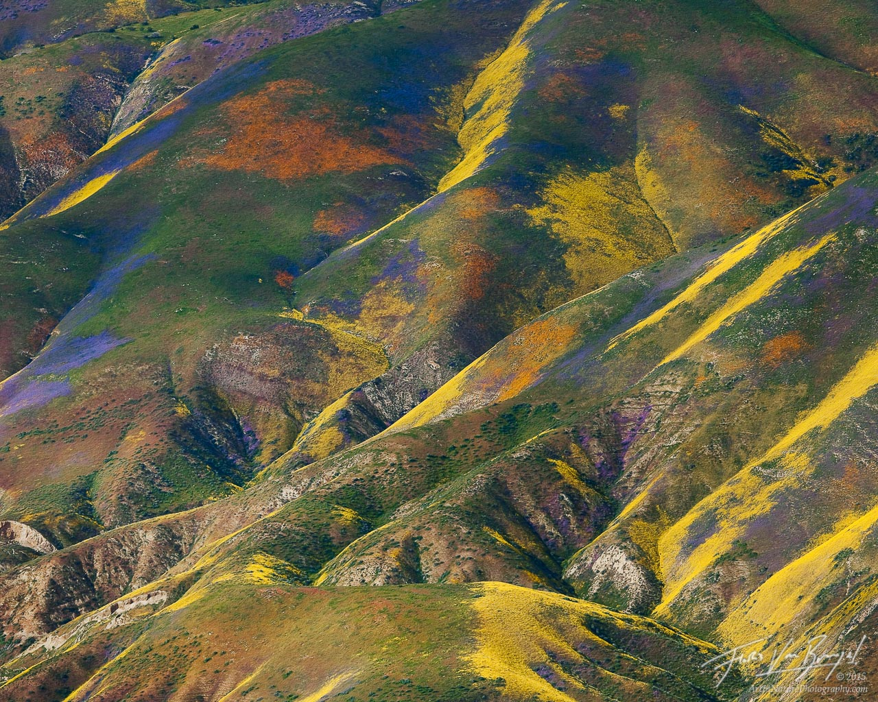 Temblor Range Flowers Aerial, Carrizo Plains National Monument, California, monet's palette, wildflower, 2010, spring, photo