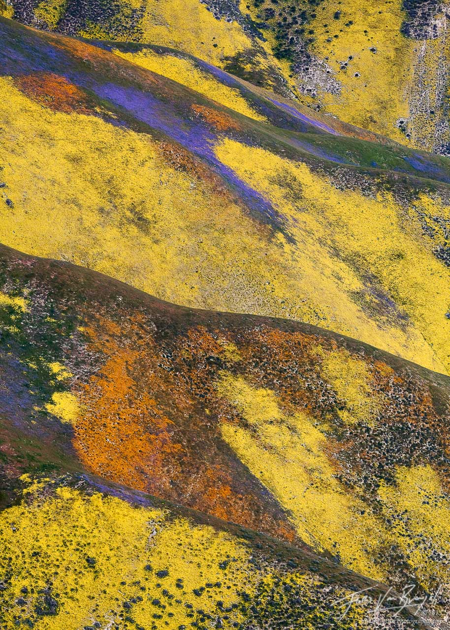Temblor Range Flowers Aerial, Carrizo Plains National Monument, California, spring tapestry, 2010, wildflowers, coreopsi, photo